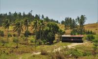 FijiAA159270adj.jpg