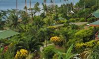 FijiAA159277adj.jpg