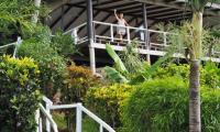 FijiAA159282adj.jpg
