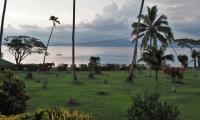 FijiAA159286adj.jpg