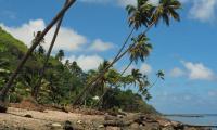 FijiAA169376adj.jpg