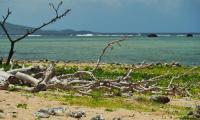 FijiAA199901adj.jpg