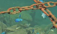 FijiAA200164adj.jpg