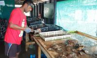 FijiAA210376edit.jpg