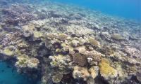 FijiGOPR3451adj.jpg